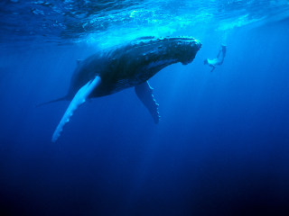 How Satellites Might Help Save the Whales