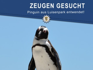 German Zoo Officials 'Shocked' After Stolen Penguin Found Dead