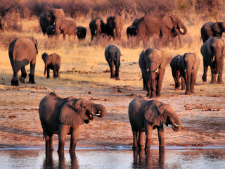 Wild Elephants Sleep Just 2 Hours a Day, Puzzling Scientists in UCLA Study