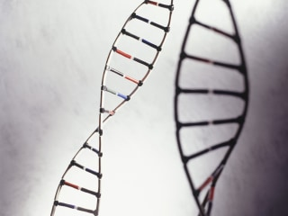 New Obesity Gene Identified for Some People of African Descent