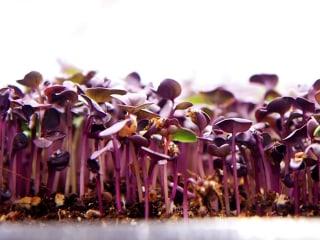 An Aquaponic Vertical Farm Grows in Brooklyn