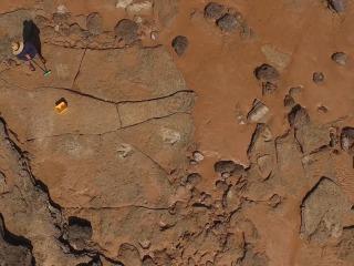 Prehistoric Prints: 'Unprecedented' Dinosaur Discovery In Australia