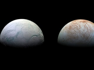 Enceladus and Europa Are the Most Likely Worlds to Support Alien Life