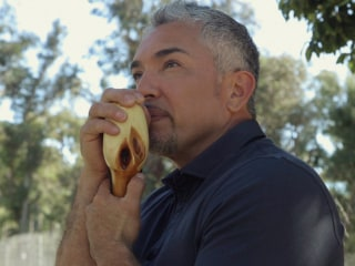 'Dog Whisperer' Cesar Millan Shares the One Skill Every Owner Needs
