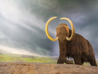 Mastodon Bone Findings Could Upend Our Understanding of Human History
