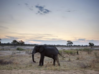 Well-Known South African Game Hunter Dies After Elephant Falls On Him