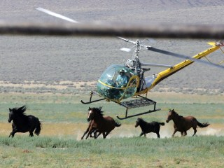 Trump's Budget Would Allow Sale of Wild Horses for Slaughter