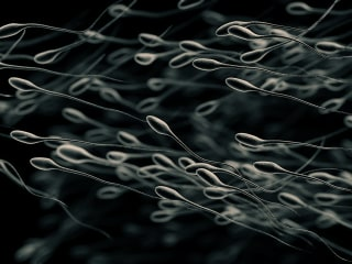Plunging Sperm Counts a 'Major Public Health' Crisis