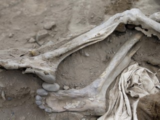 Bodies of 19th Century Chinese Migrant Workers Found in Pre-Incan Site In Peru