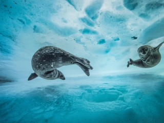 Nature's Finest: See the Finalists for Wildlife Photographer of the Year