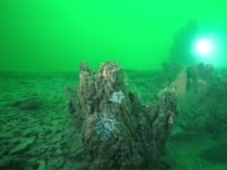 The Unveiling of an Ancient Underwater Forest off Alabama Coast
