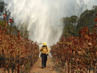 For California's Vintners, Fires Couldn't Have Come at a Worse Time