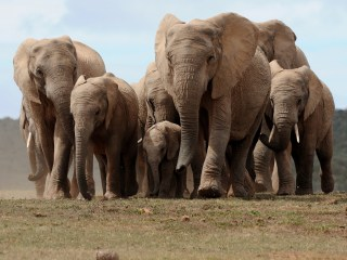 Can these drones save elephants from extinction?