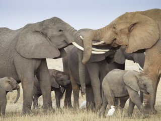 Why don't elephants get cancer? New gene study aims to explain