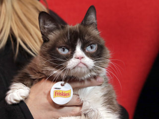 'Grumpy Cat' wins $700,000 in federal case over identity