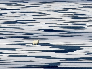 Scientists hatch bold plan to save polar bears