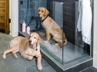 Dog showers are the latest home trend — and they're surprisingly practical