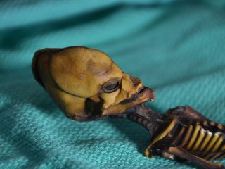 Weird little Atacama skeleton was just a diseased fetus