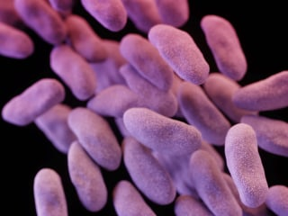 Avoidable sepsis infections send thousands to gruesome deaths