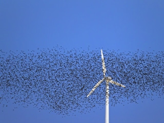 Wind energy takes a toll on birds, but now there's help