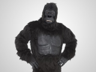 What can a gorilla teach us about the search for space aliens?
