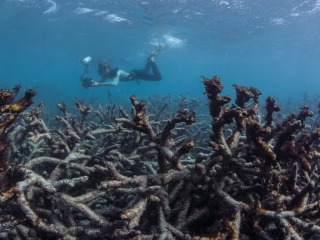 Scope of Great Barrier Reef's massive coral bleaching alarms scientists