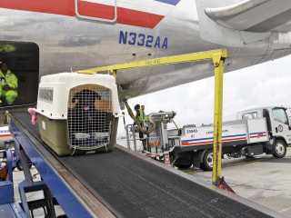 United rolls out new pet transportation policy, bans certain breeds