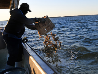 Trump adds 15,000 work visas. But is it too late for shell-shocked crabbers on Hoopers Island?