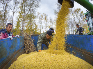 Trade off: China soybean imports set for biggest drop in 12 years amid tariff conflict