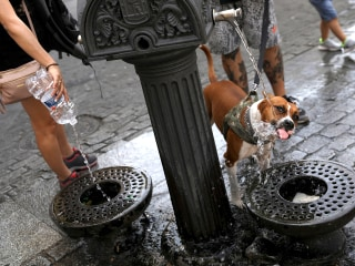 How to keep yourself (and your dog) cool in a heat wave