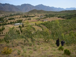 Pakistan plans to plant 10 billion trees to fight climate change