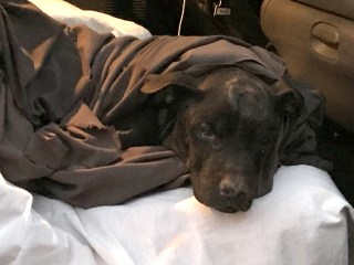 Dog named Magic found alive two days after brick wall collapses on him