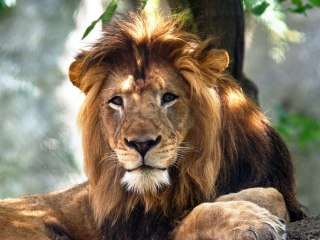 Lioness' killing of the father of her offspring is 'extremely rare,' experts say