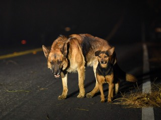 California wildfires: Thousands of animals displaced as fires tear through communities