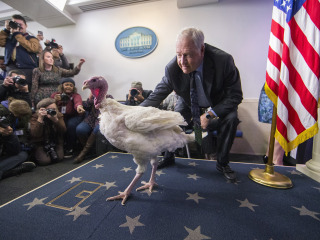 Turkeys take Washington: Lucky birds receive presidential pardon