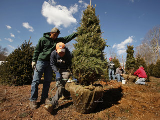 MAP: Here's where Christmas trees in the U.S. grow