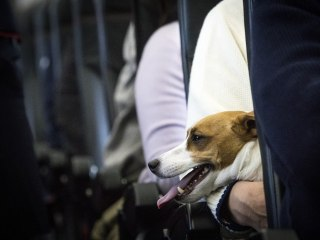 Cute, but not cute enough: Delta bans emotional support puppies and kittens