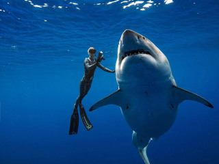 Marine biologist swims with 20 foot long great white shark
