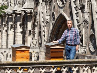 Notre Dame beekeeper waits to learn fate of his at least 180,000 bees