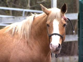 Bobcat shot and killed after attacking golfer, horse