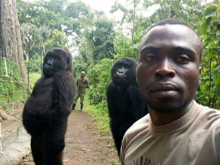 Park ranger's selfie with orphaned gorillas goes viral