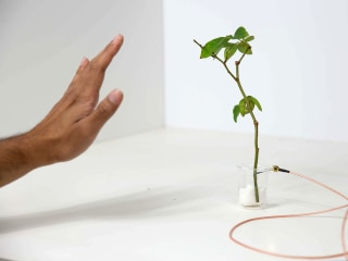 These 'cyborg' plants can sense motion and move on command