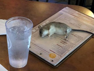 Live rat falls from ceiling and lands on table at Buffalo Wild Wings