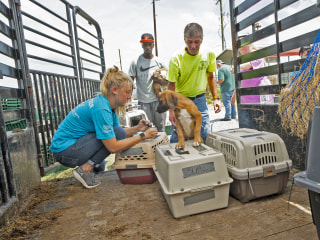 More than 120 dogs, cats in path of Tropical Storm Barry in Louisiana are flown to safety