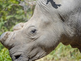 Your safari selfies are cute, but they're a road map for poachers