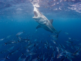 Some experts worry Shark Week focuses too much on the sensational, not enough on science