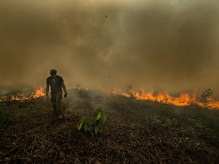 Climate change, oxygen and biodiversity: Amazon rainforest fires leave plenty at stake