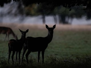 Michigan man shoots brother after mistaking him for deer on hunting trip
