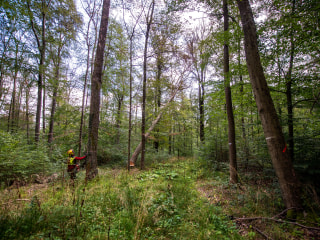 Forests of German myth in 'catastrophic' situation due to drought and heat