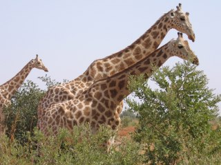 Gunmen kill 6 French tourists at a wildlife park in Niger